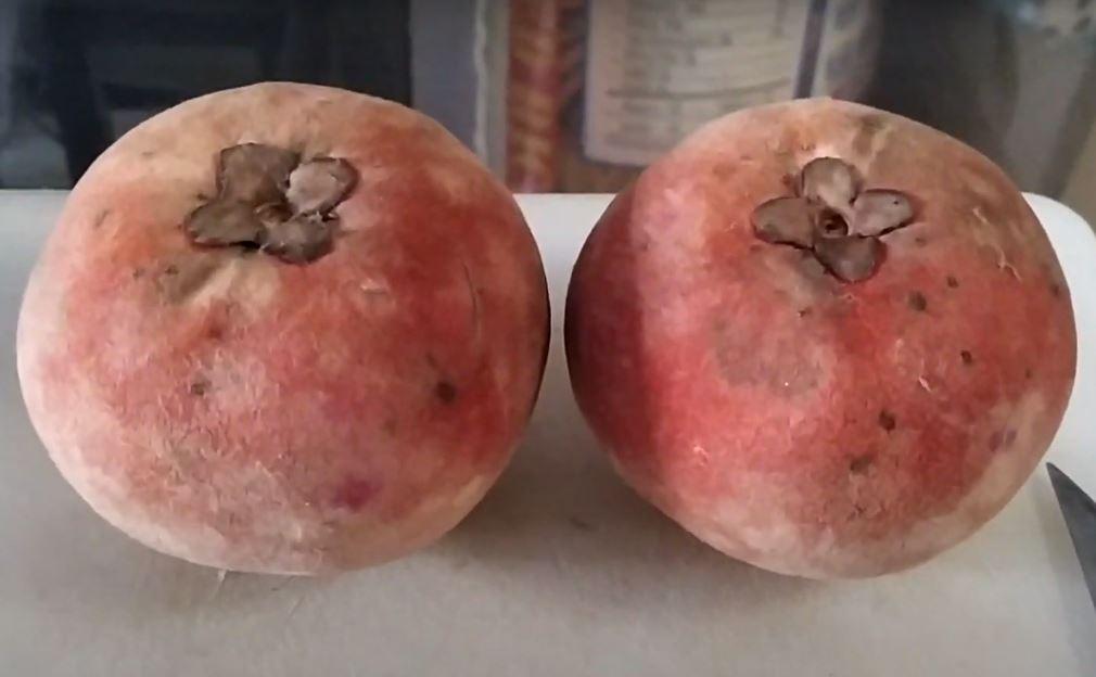 Velvet apple fruit